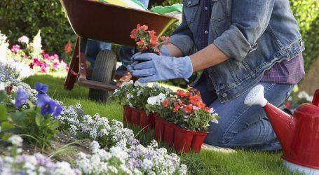 Charlas de Jardinería