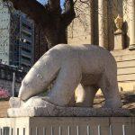 Turismo – Un oso andariego